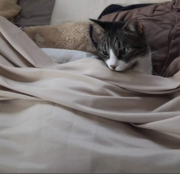ねこ日記#2|眠いね2