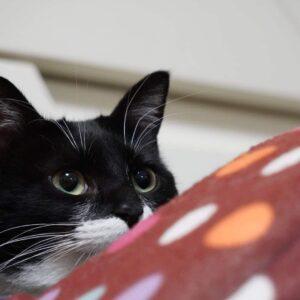 猫の日記でもはじめようかな